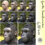 Gorilla 10 % Steps